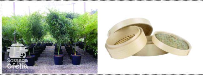 bambu e cesto